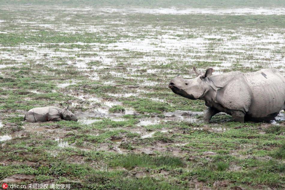摄影师捕获犀牛妈妈亲吻幼崽一幕 画面温馨有爱