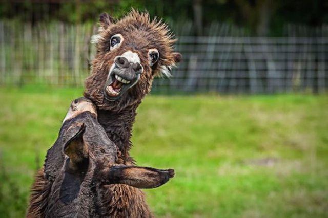 滑稽动物的搞笑表情:小猫抢镜猩猩思考
