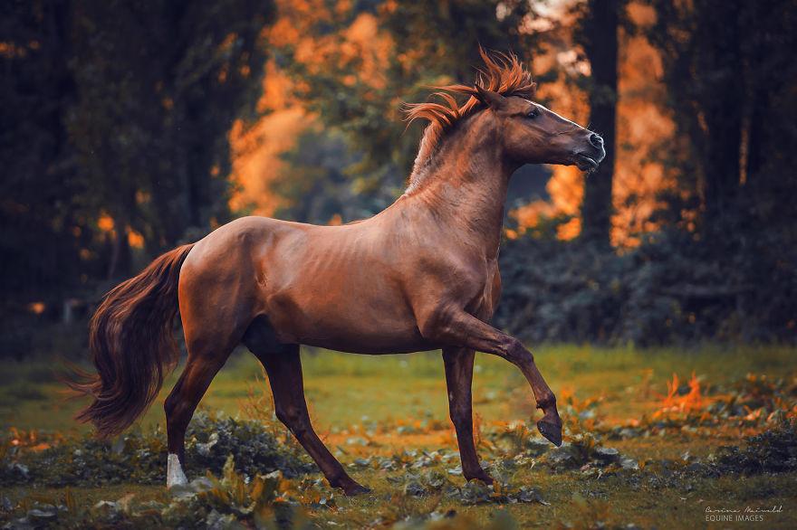 天地间的自由生灵 女摄影师镜头下的骏马