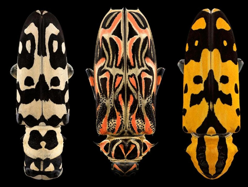 怎么越看越害怕?神奇的甲虫微距摄影
