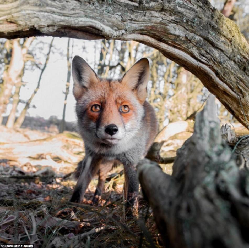 森林中动物的隐秘生活:松鼠忘情享用坚果