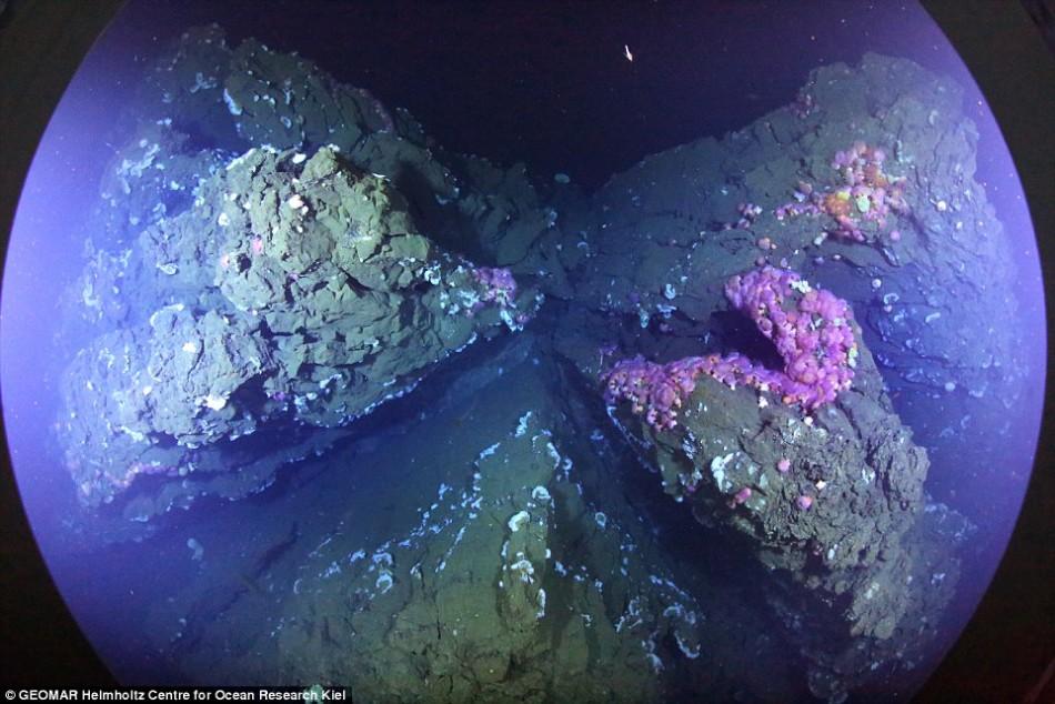 海底火山首次向人们展现全貌:海星遍布似繁星
