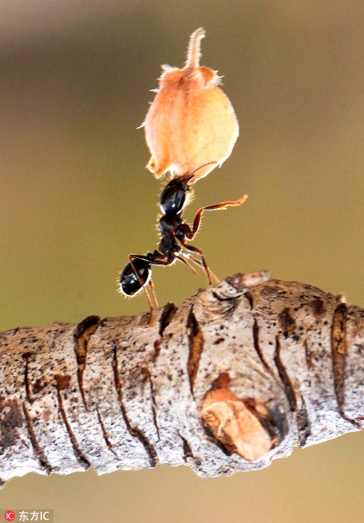 图片搬鸭掌蚂蚁炖东西怎么做好吃图片