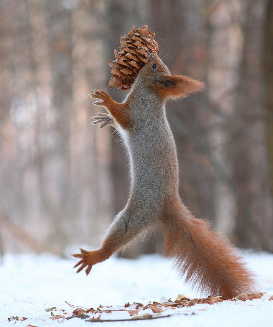 爱打雪仗爱摄影 逗趣松鼠的玩乐生活