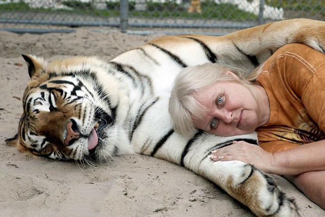 做梦梦到养老虎和狗