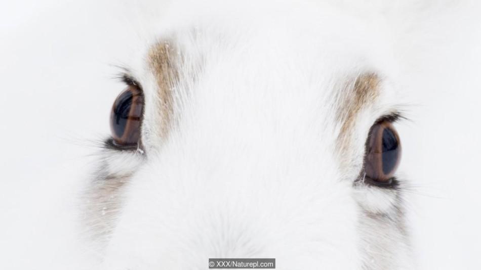 动物令人惊叹的眼睛:跳蛛4对眼视觉出色