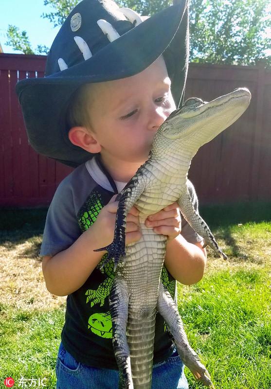 2岁男孩与鳄鱼大玩亲亲如密友 成养鳄鱼小能手
