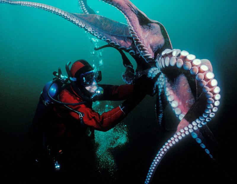 """深海""""梦魇"""":从巨型章鱼到翻覆帆船的鲸鱼"""