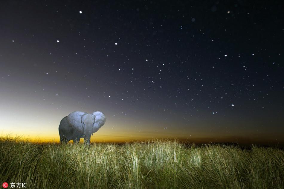摄影师冒死拍黑夜猛兽:月圆夜记录巨兽放松一刻
