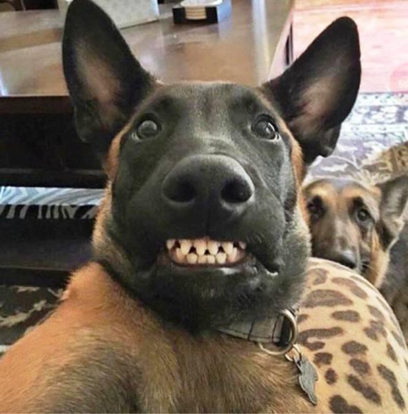 哎呦,你很会抢镜哦:动物也会摆pose