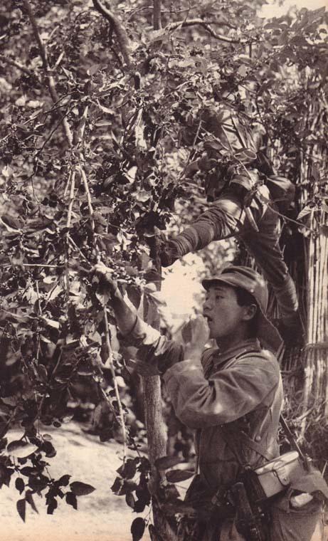 勿忘历史:二战时期日军罕见丑照