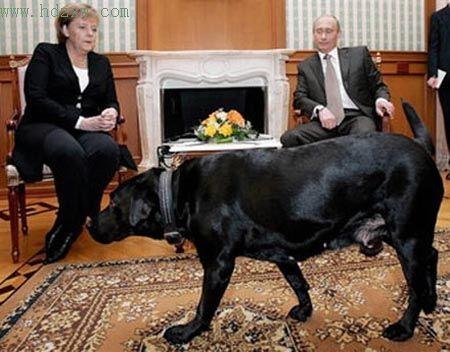 普京爱犬向默克尔示好(组图)