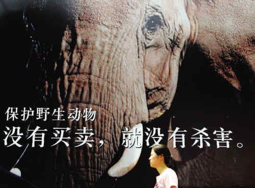 中国野生动物保护引关注