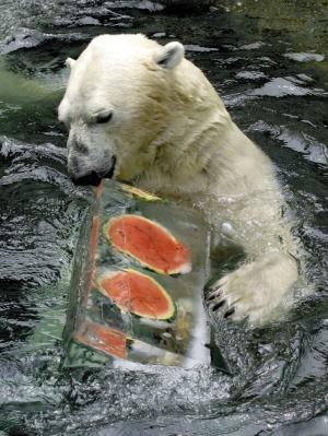 动物消暑的方法