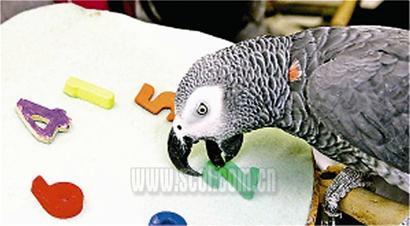 世界上最聪明的鹦鹉死了