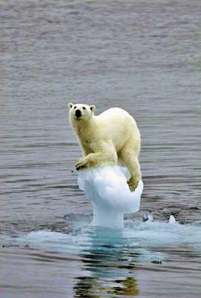 英国评出07年野生动物摄影奖