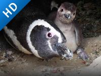 请关注企鹅