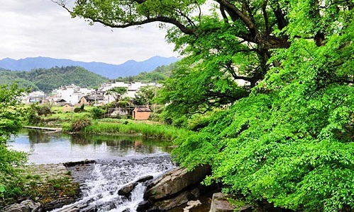 江西婺源一瞥:绿树灰墙老村庄