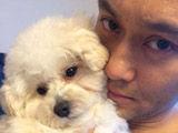 张智霖称要将爱犬毁灭