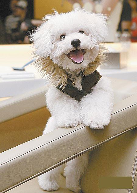 图文:明星养狗--蔡依林的爱犬