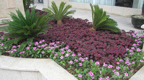 欧式花坛景观总平面