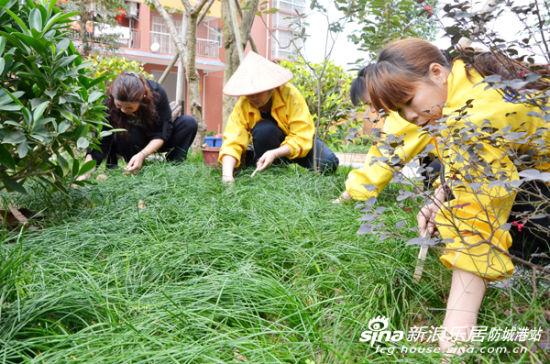"""小区内开展""""除草护树,爱绿护绿""""植树节活动."""
