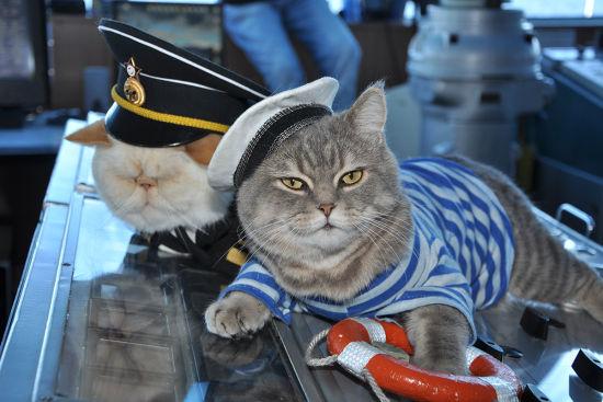 俩儿猫咪现身俄罗斯游轮