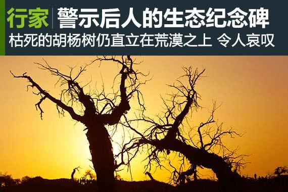 行家:警示后人的生态纪念碑 怪树林