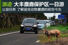 约会国宝 自驾游大丰麋鹿保护区