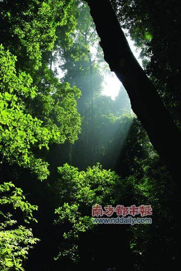 雨林迷城 触摸西双版纳原生态之美(组图)