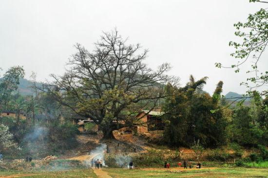 有百余人家的壮族村寨坝美村,是坝子里唯一的村子.图片