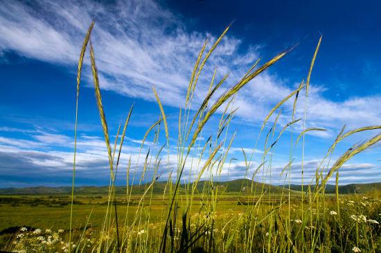 内蒙古呼伦贝尔大草原旅游_内蒙古呼伦贝尔大