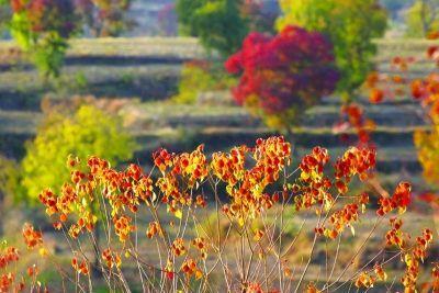 抓住最后一抹秋天 去大悟看色彩斑斓的世界
