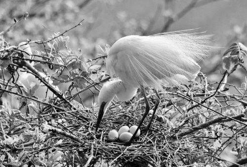丹东鹭类繁殖区遭破坏 上千鹭鸟