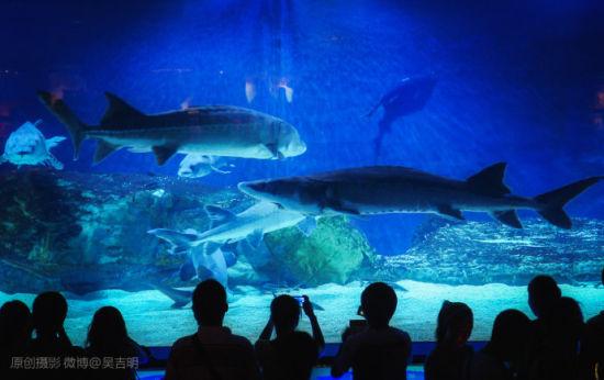 北京海洋馆位于北京动物园内长河北岸