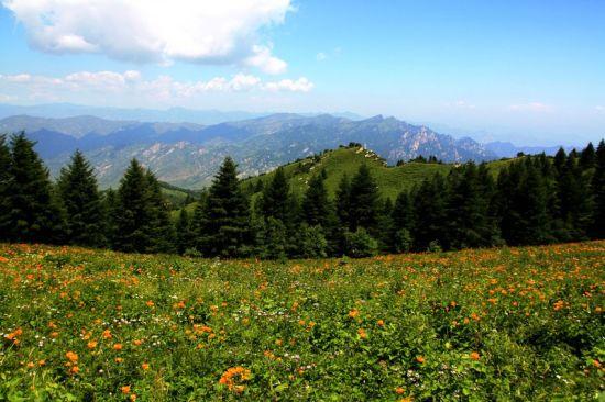 盛夏最美旅行地 五台驼梁金莲花盛开