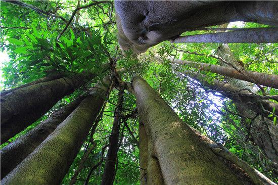 我和望天树热带雨林有个约会