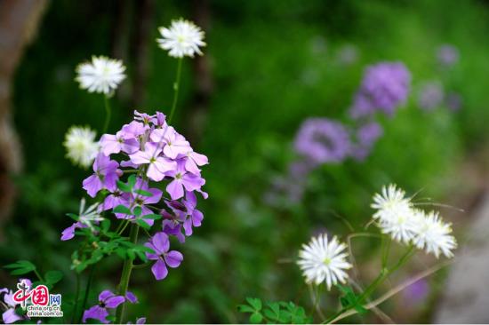 最美7月 在雾灵山赏花赏云赏雾赏美色