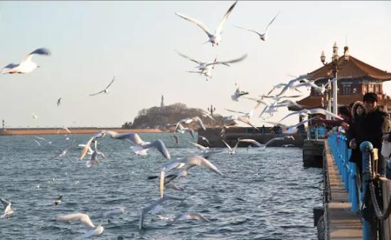 与海鸥相恋 专属青岛的冬日浪漫