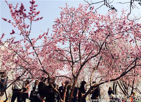 花期将至 津城最美赏花地指南