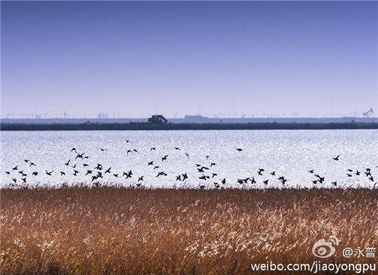 观鸟季 去北大港湿地看候鸟齐飞