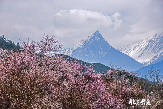 西藏 走进雪域高原的桃源花海