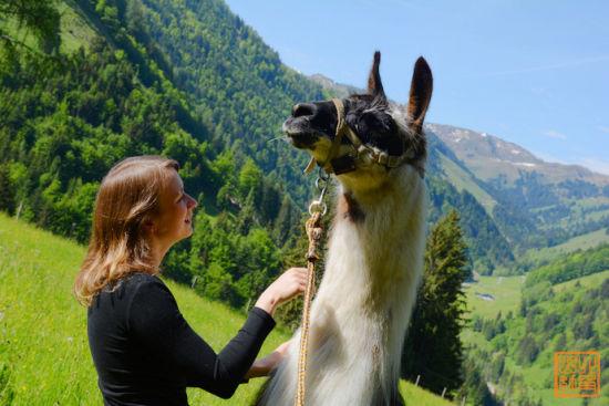 就像在瑞士,德国,法国等等阿尔卑斯山一样,这里是奥地利著名的度假