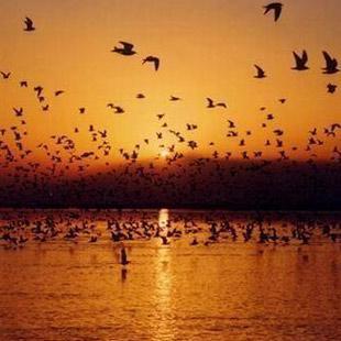 赏沙湖落日 观群鸟嬉戏(图)