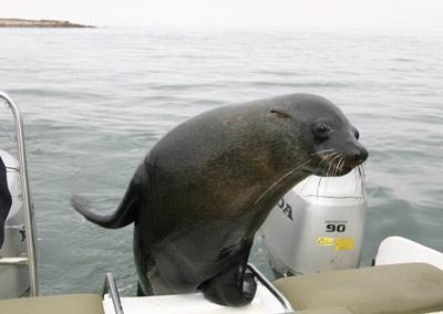 十字角(全球最多的海豹聚集地)――颓废方舟(非洲最大的史前岩画群)