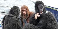 """图文-莱科宁变身""""大猩猩""""三只大猩猩一起嬉戏"""