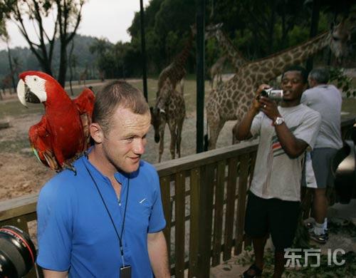 图文-曼联队员集体游览广州动物园鲁尼与鹦鹉合影