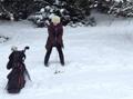 雪地球场生机勃勃