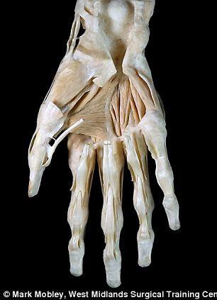 医学人体解剖图视频_英展出达芬奇人体解剖素描:准确性惊人(图) 素描 达芬奇 ...