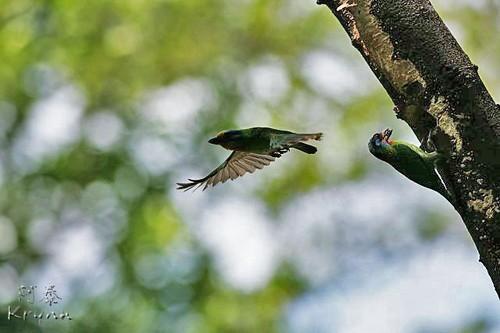 拍鸟网图片_拍鸟达人分享高难度的飞鸟拍摄技巧(2)_数码_科技时代_新浪网